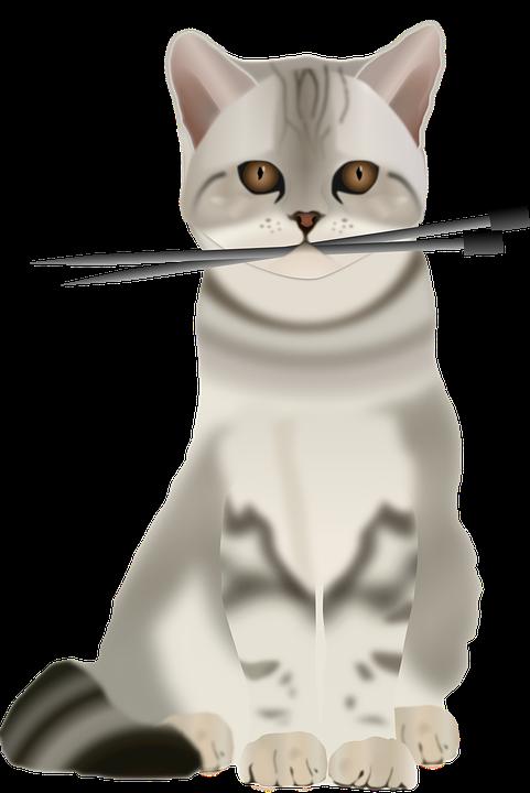 strikking for nybegynnere med bilde av katt som har strikkepinner i munn